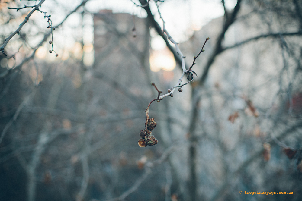 twoguineapigs_winter-sticks_1500-2.jpg