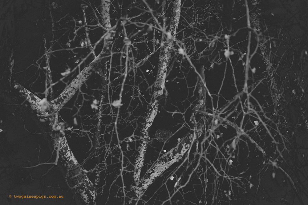 twoguineapigs_winter-sticks_1500-5.jpg