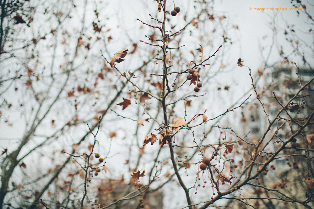 twoguineapigs_winter-sticks_1500-10.jpg