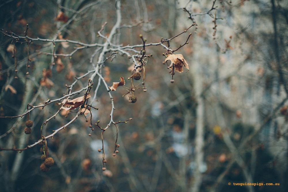 twoguineapigs_winter-sticks_1500-11.jpg