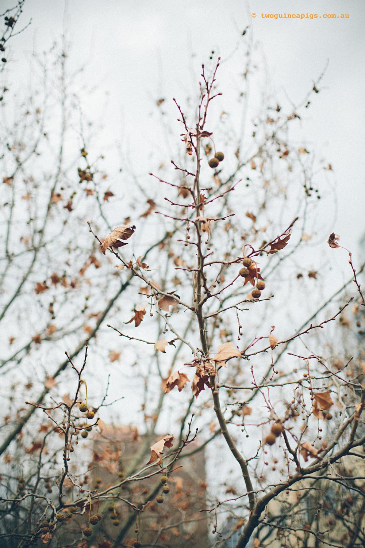twoguineapigs_winter-sticks_1500-9.jpg