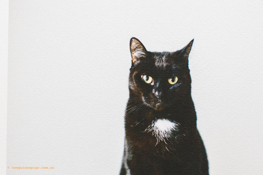 twoguineapigs_fine-art-prints_1500-3.jpg