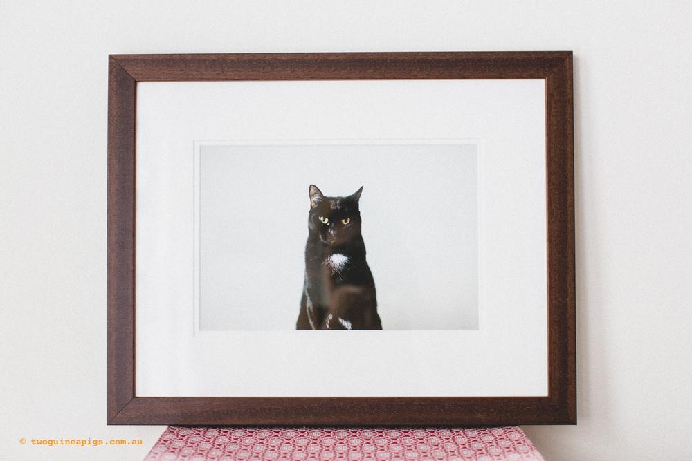 twoguineapigs_standard-frames_1500.jpg