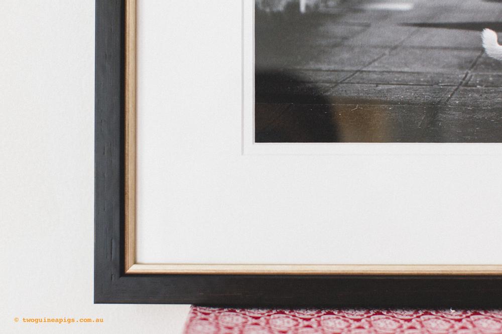 twoguineapigs_signature-frames_1500-2.jpg