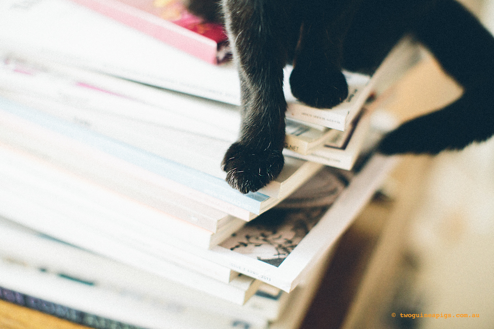twoguinepaigs_blackcats_pf-on-books_1500-2.jpg