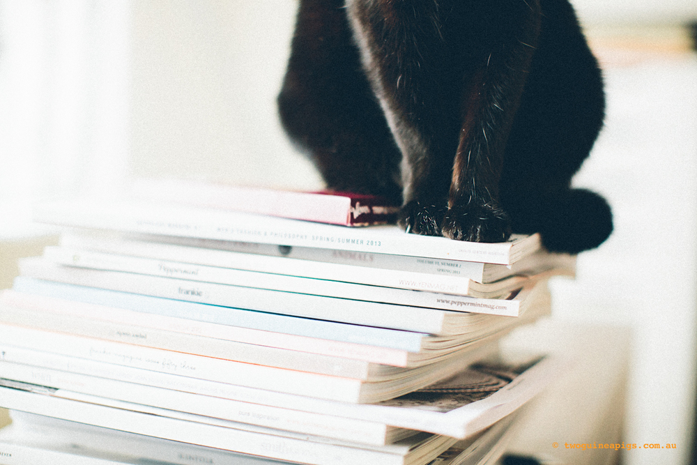 twoguinepaigs_blackcats_pf-on-books_1500-8.jpg