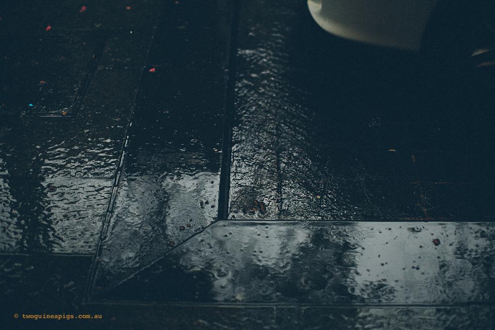 twoguineapigs_rain_spring_1500-2.jpg