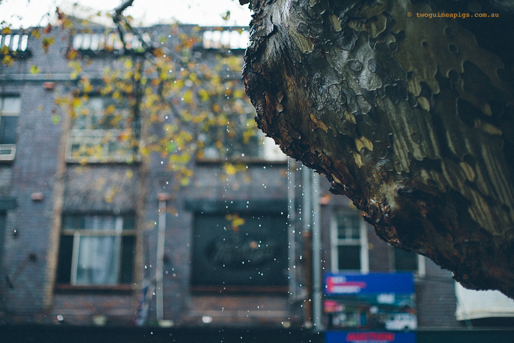 twoguineapigs_rain_spring_1500-5.jpg