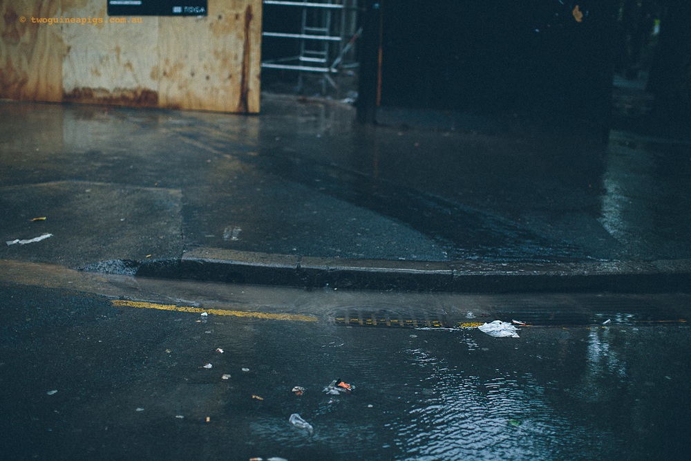 twoguineapigs_rain_spring_1500-6.jpg