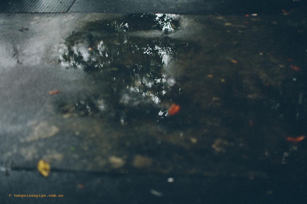 twoguineapigs_rain_spring_1500-7.jpg