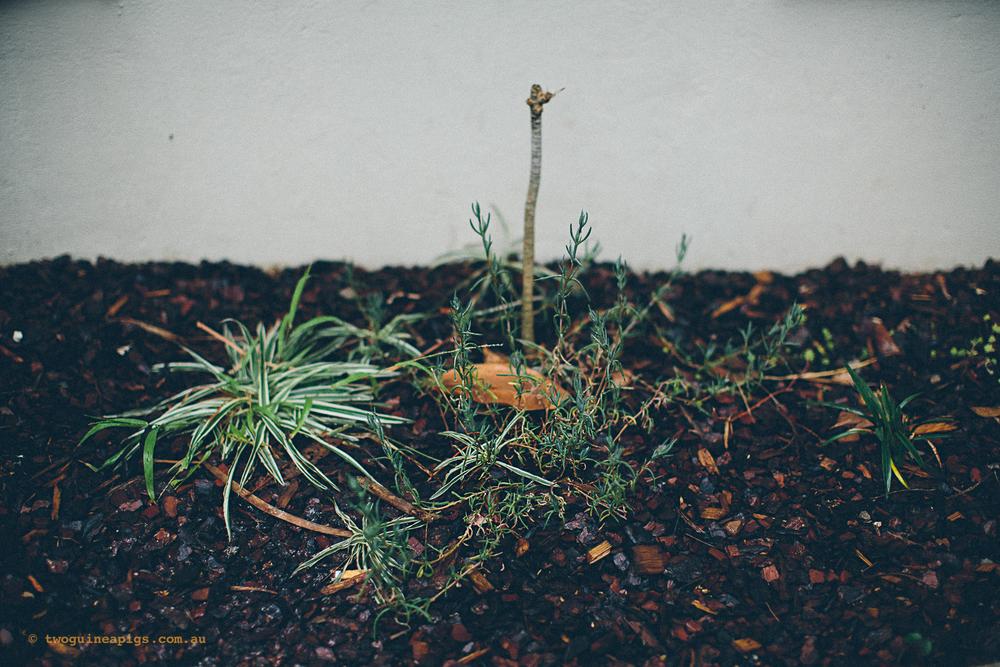 twoguineapigs_rain_spring_1500-10.jpg