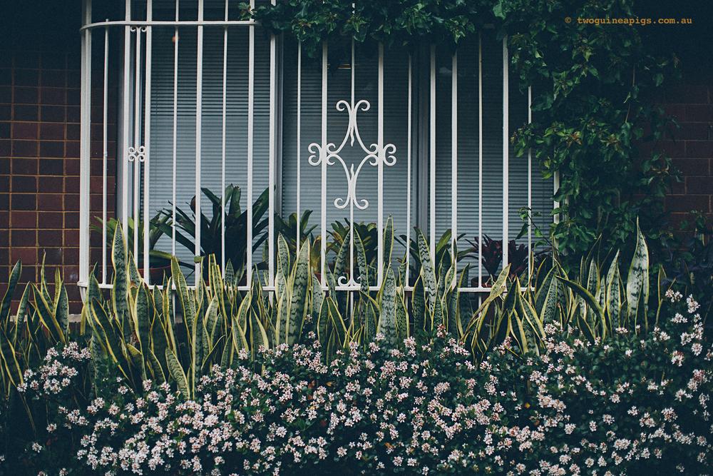 twoguineapigs_rain_spring_1500-16.jpg