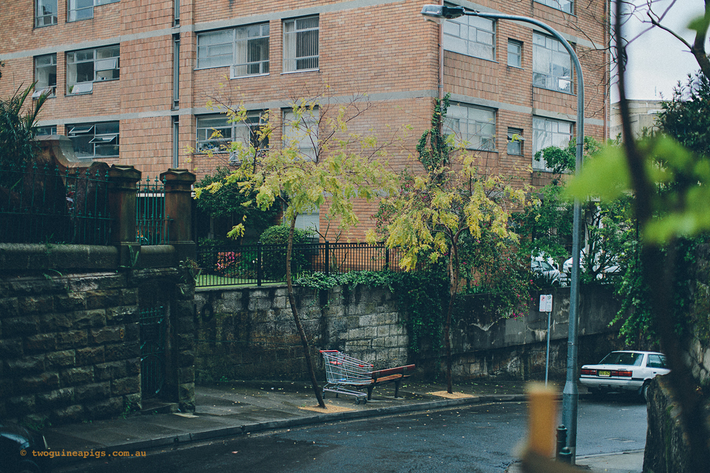 twoguineapigs_rain_spring_1500-17.jpg