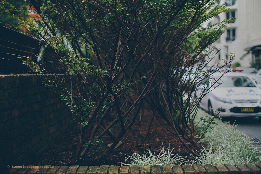 twoguineapigs_rain_spring_1500-19.jpg