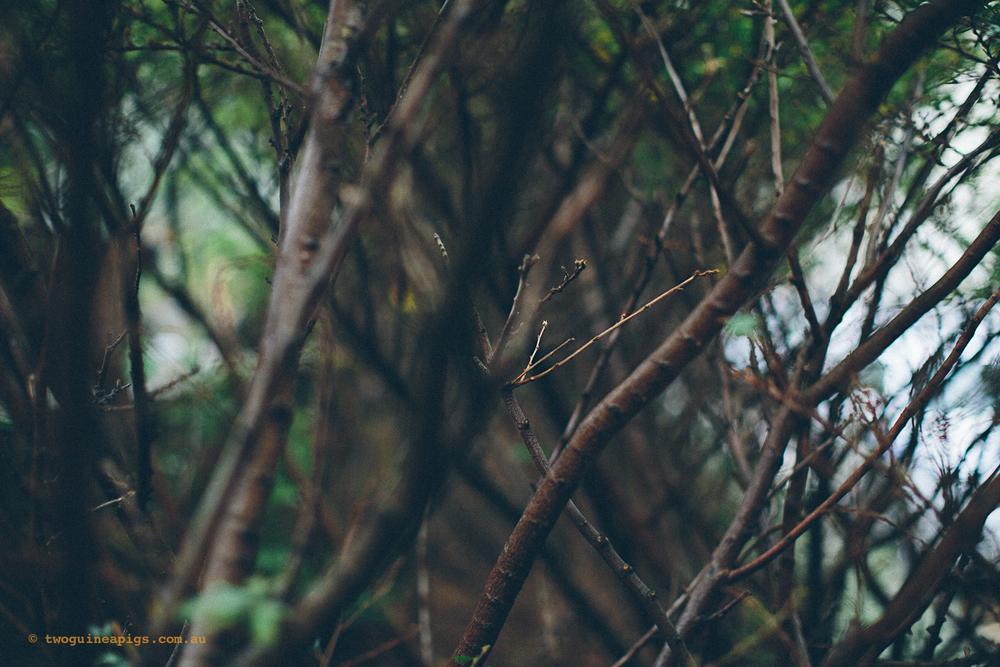 twoguineapigs_rain_spring_1500-21.jpg