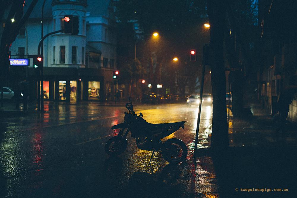 twoguineapigs_rain_spring_1500-26.jpg