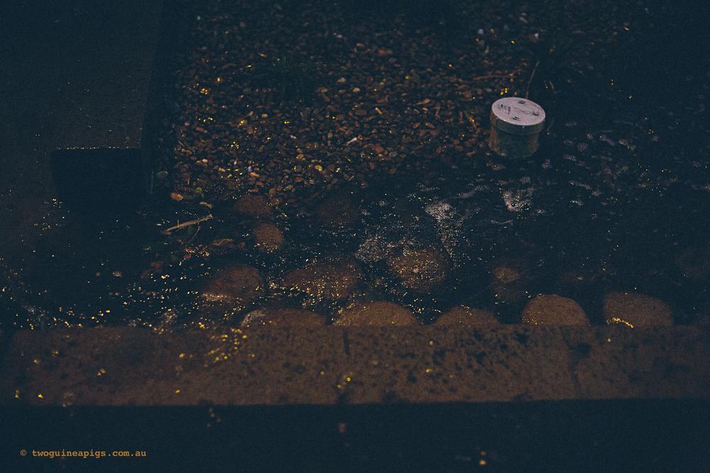 twoguineapigs_rain_spring_1500-30.jpg