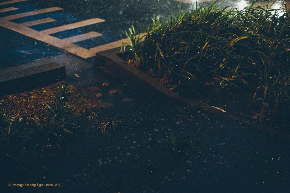 twoguineapigs_rain_spring_1500-31.jpg