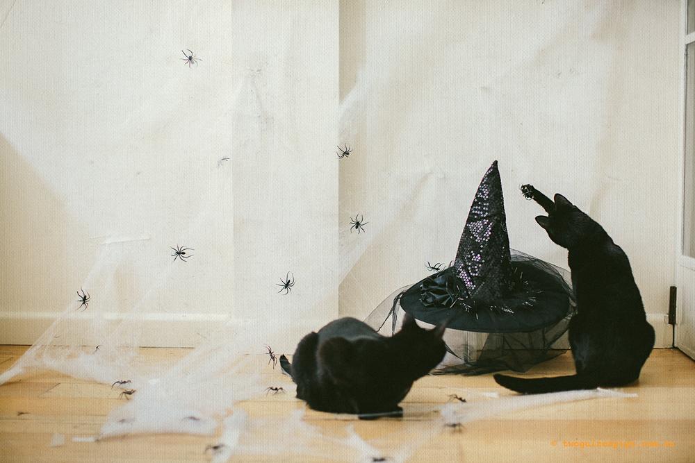 twoguinepaigs_halloween_witchshat_1500-4.jpg