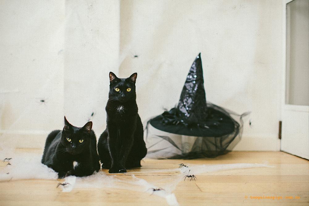 twoguinepaigs_halloween_witchshat_1500-3.jpg