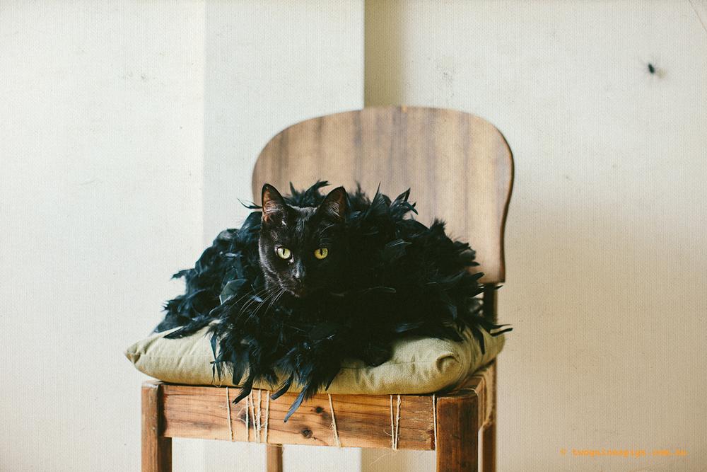 twoguineapigs_blackcats_halloween_portraits_1500-2.jpg