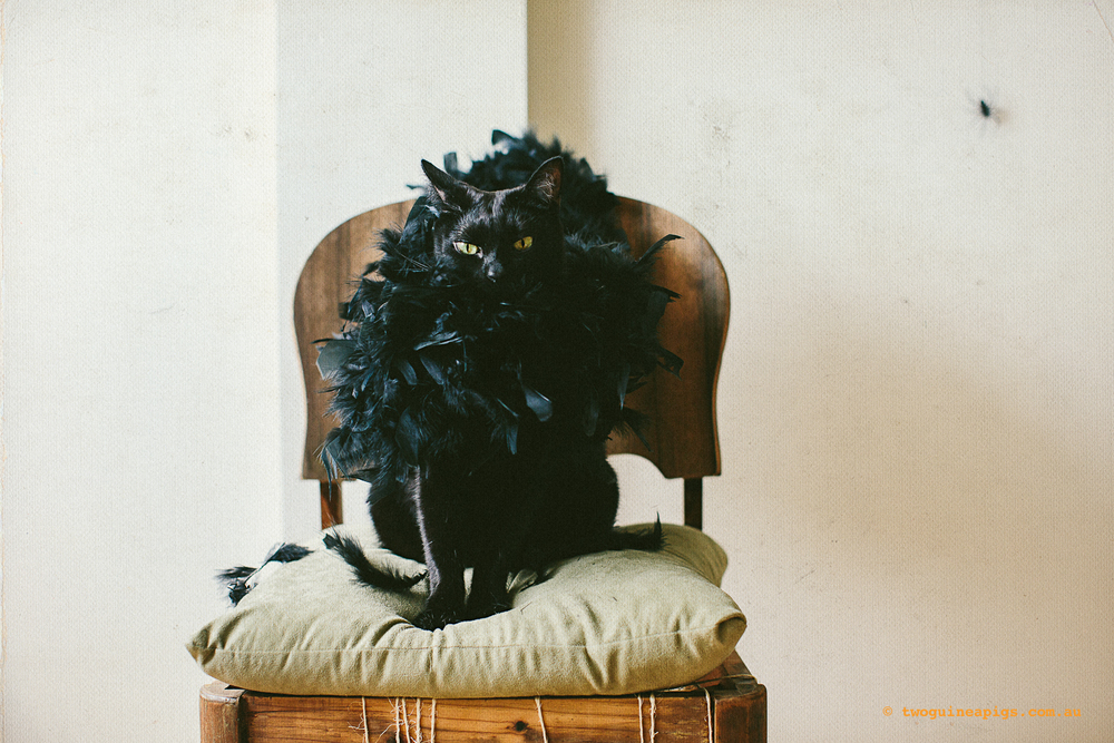 twoguineapigs_blackcats_halloween_portraits_1500.jpg