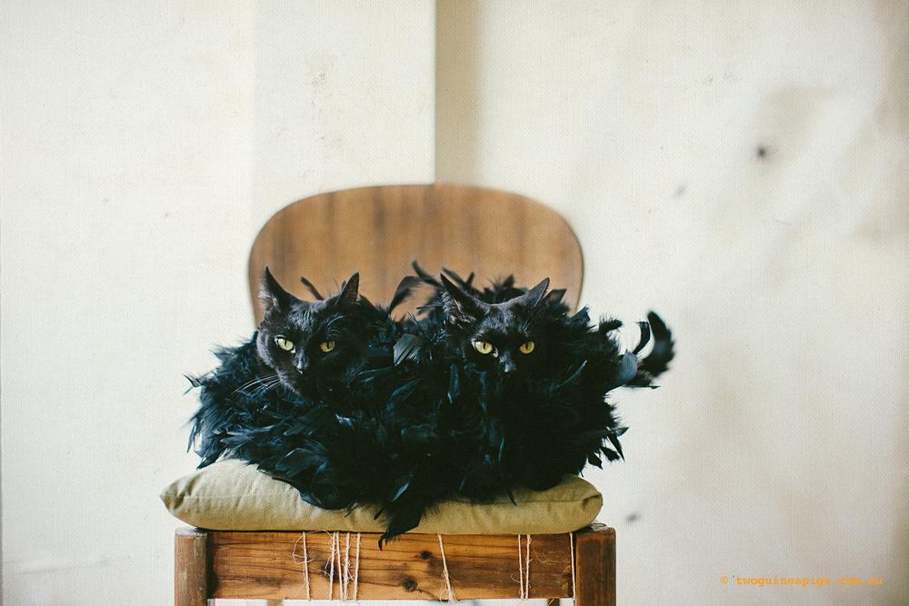 twoguineapigs_blackcats_halloween_portraits_1500-3.jpg