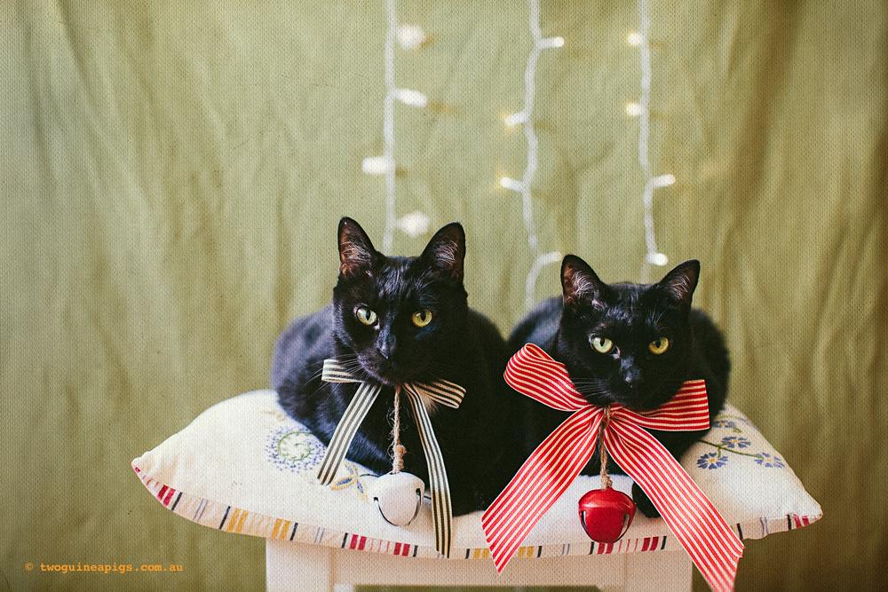 twoguineapigs_blackcats_xmas_2013_1500-2.jpg