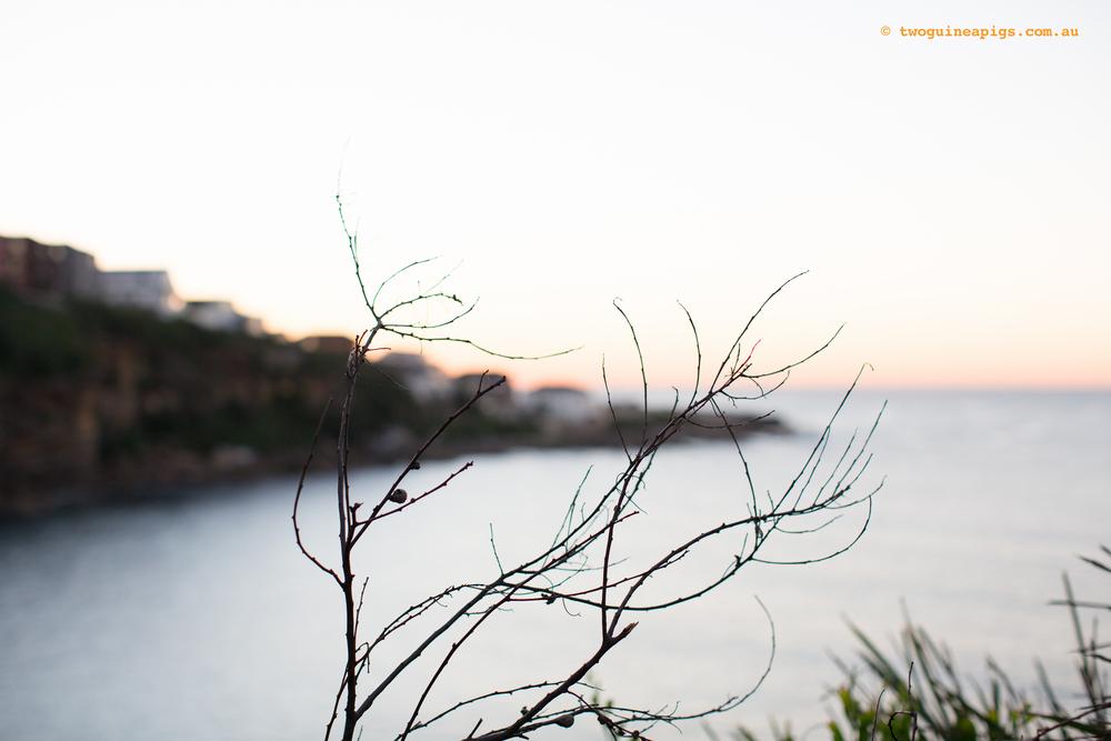 twoguineapigs_moe_poodle_landscapes_slide_3000-2.jpg