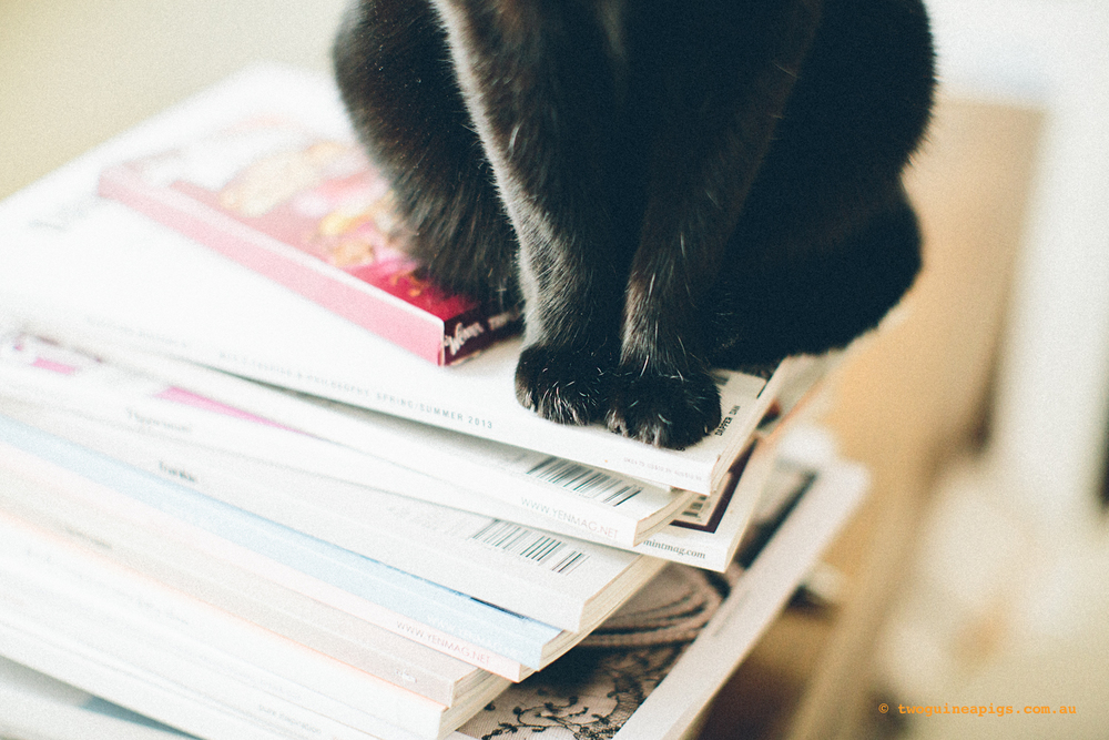 twoguinepaigs_blackcats_pf-on-books_1500-3.jpg