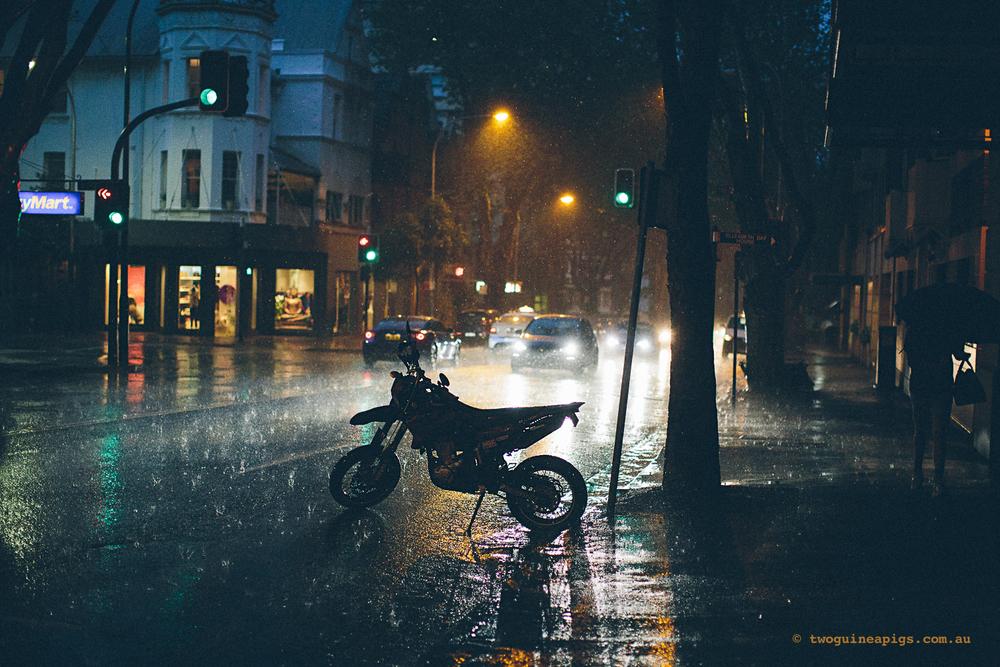 twoguineapigs_rain_spring_1500-27.jpg