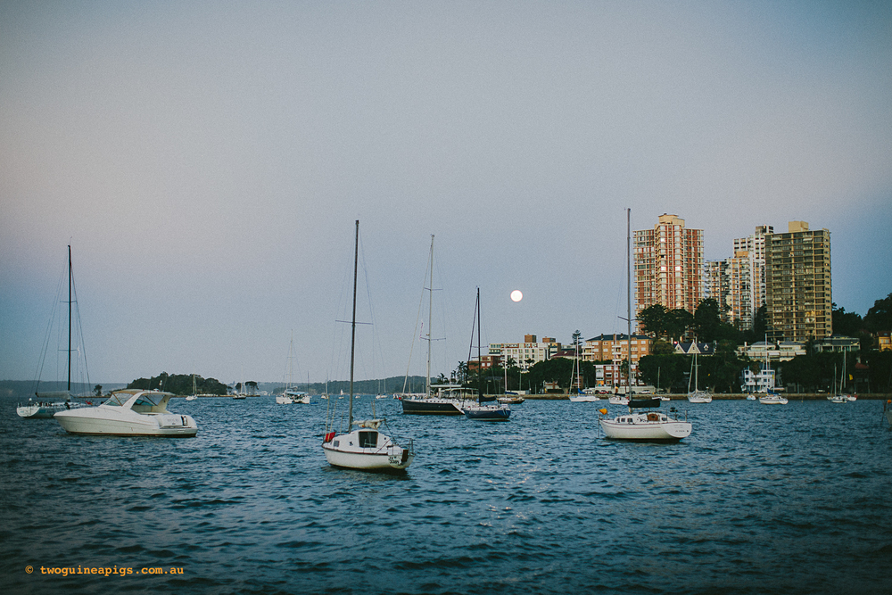 twoguineapigs_beare_park_landscapes_fullmoon_1500.jpg