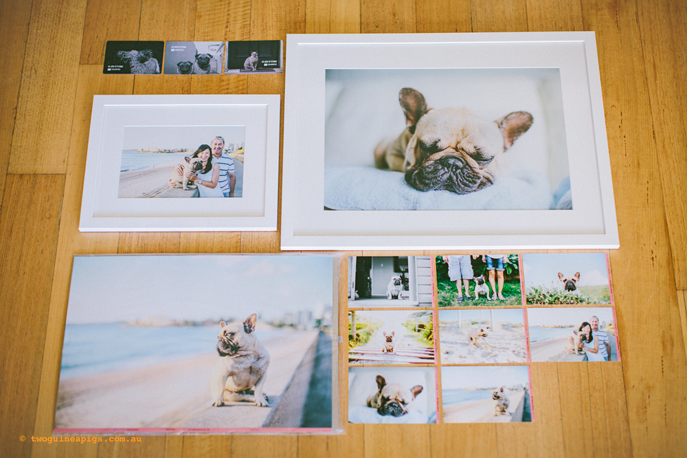 twoguineapigs_pom_french_bulldog_framed_sydney_pet_photographer_1500-2.jpg