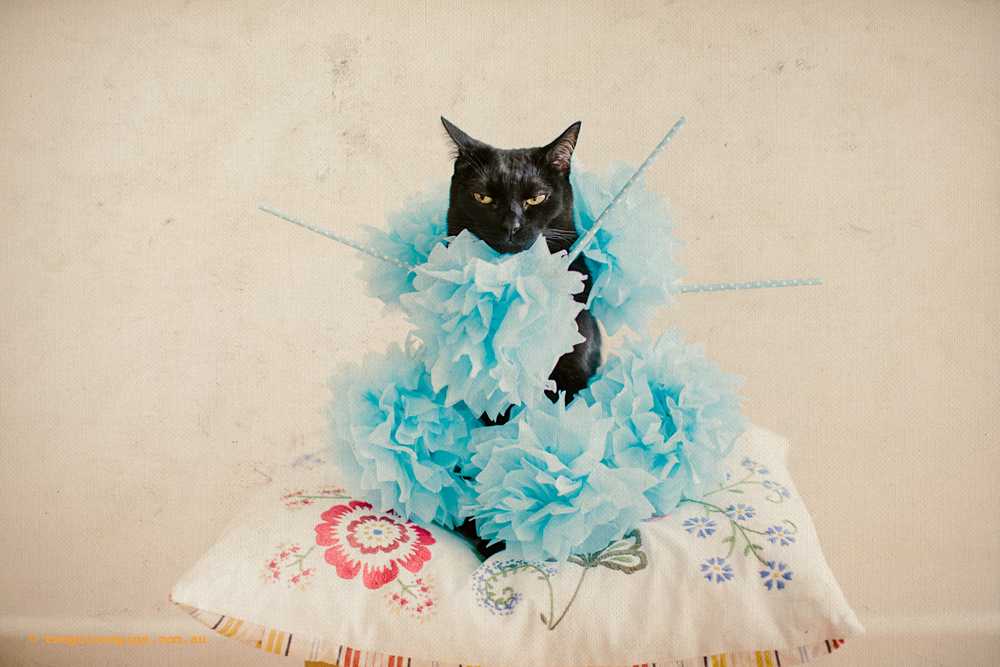 twoguineapigs_fair_day_mardi_gras_black_cat_drag_queen_series_900-1.jpg