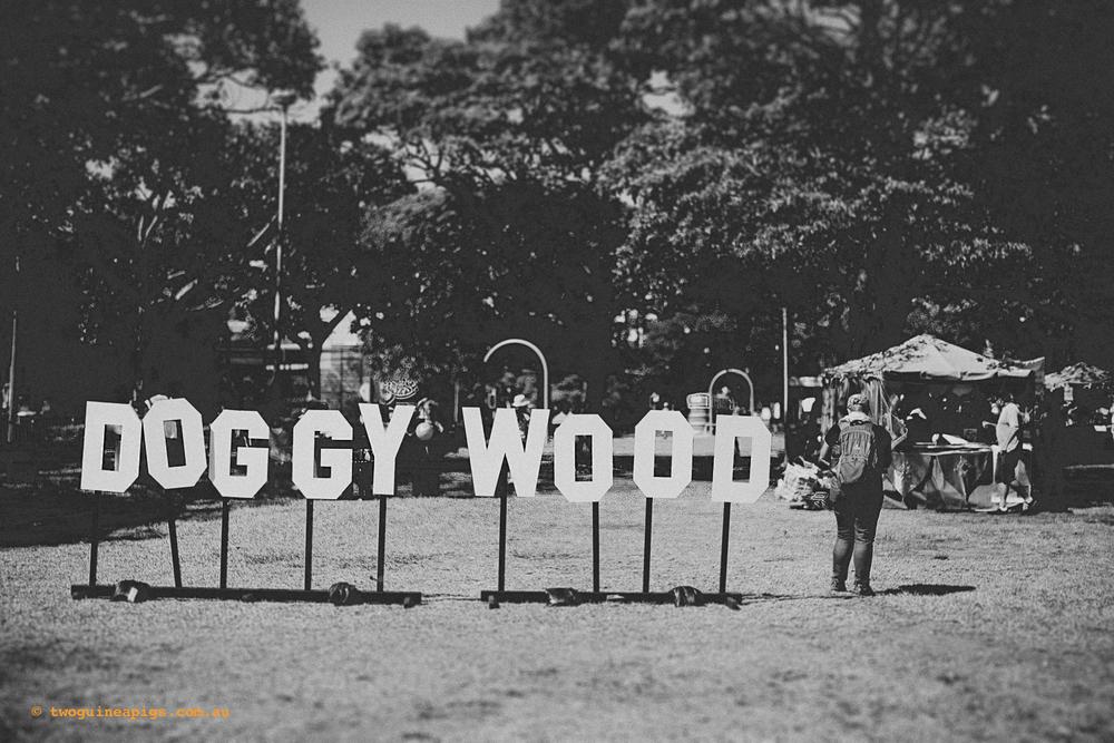 Doggywood, Fair Day 2014