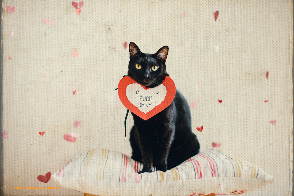 twoguineapigs_valentines_black_cat_series_pet_photography_1500-2.jpg