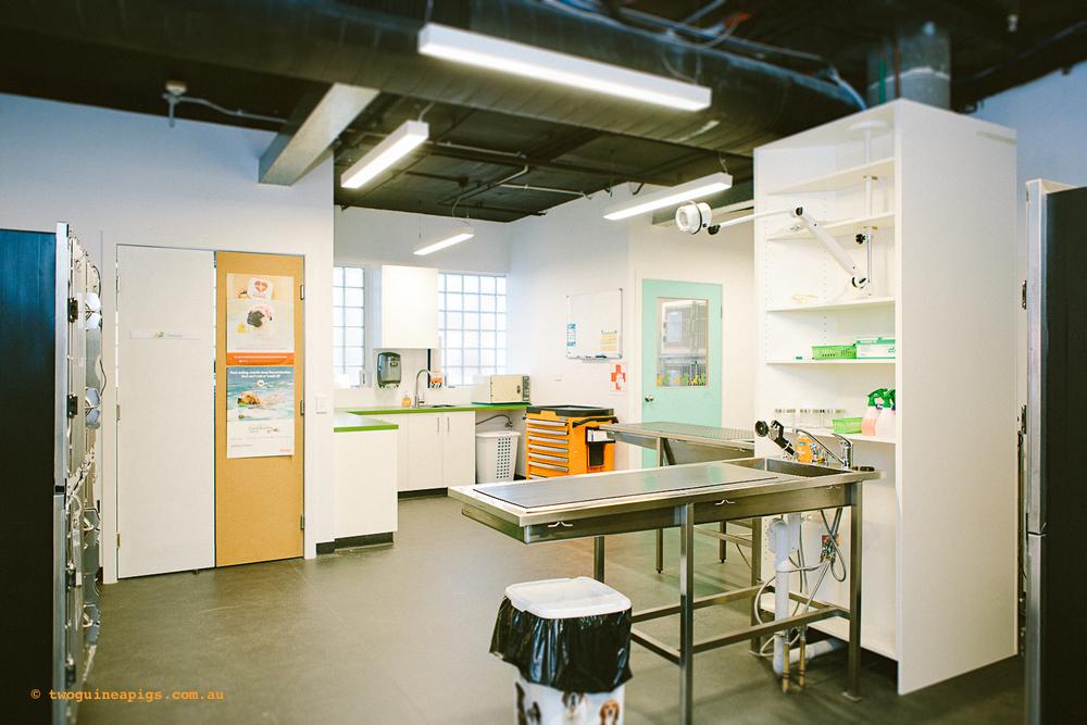 twoguineapigs_ppvh_hospital_tour_interior_pet_photographer_1500-3.jpg