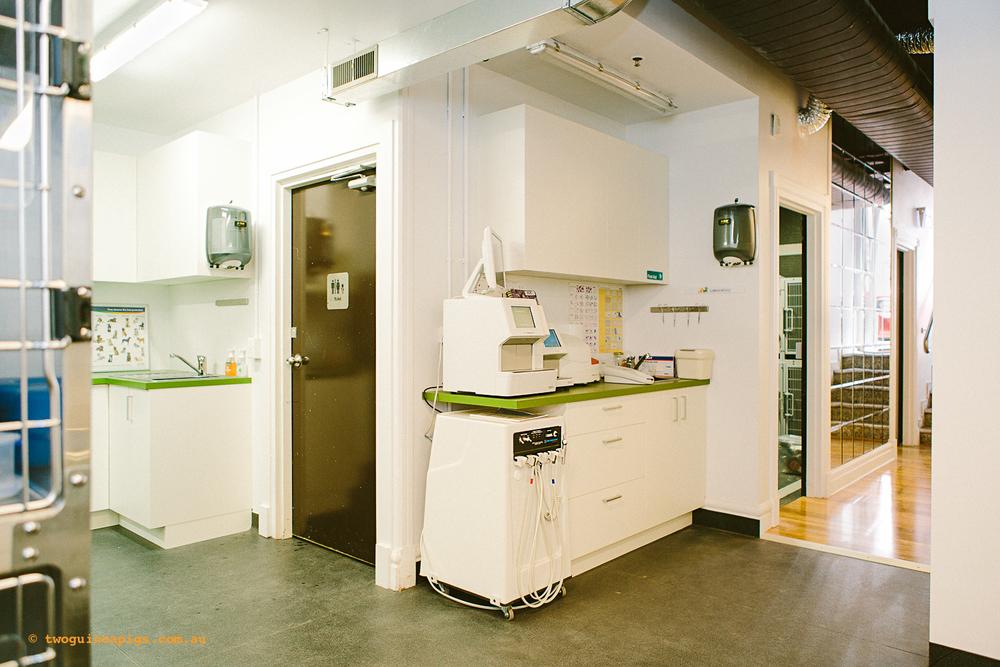 twoguineapigs_ppvh_hospital_tour_interior_pet_photographer_1500-6.jpg