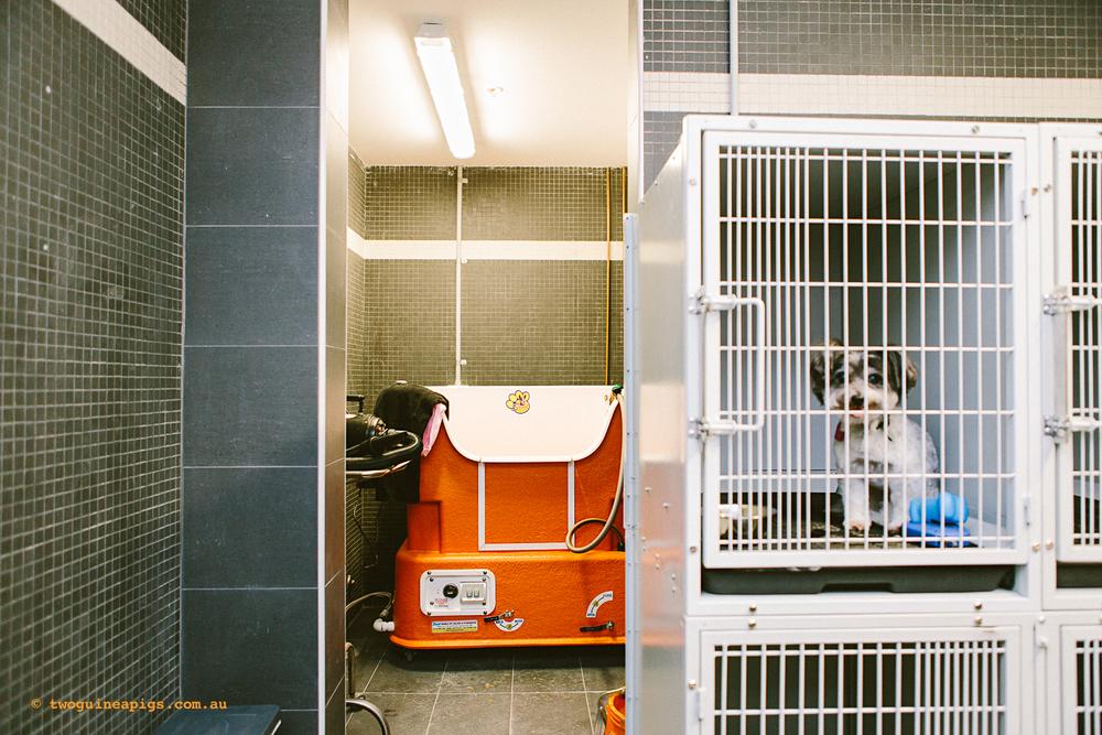twoguineapigs_ppvh_hospital_tour_interior_pet_photographer_1500-7.jpg