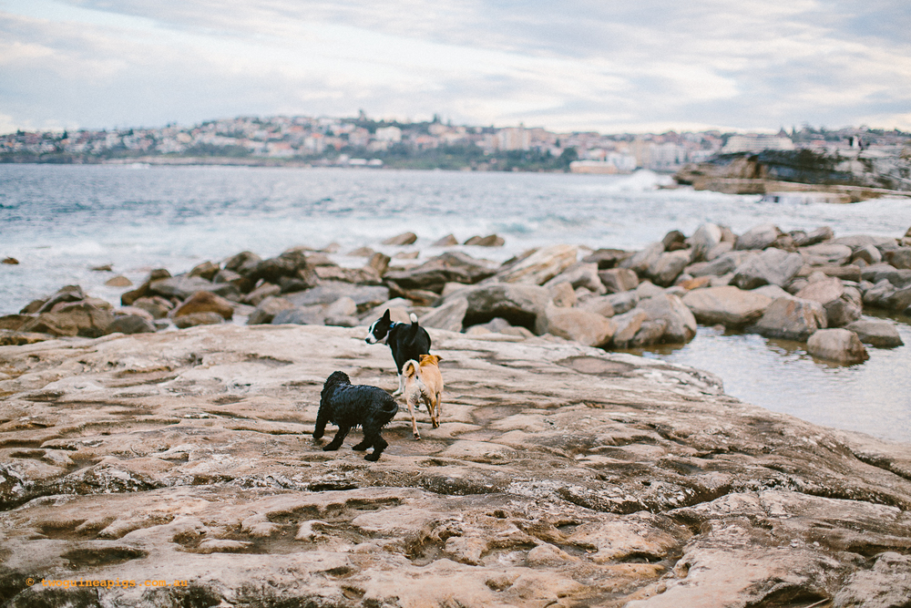 twoguineapigs_pet_photography_clovelly_landscapes_beach_dogs_1500.jpg