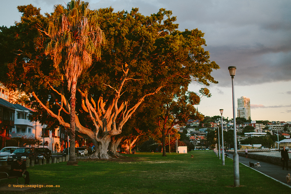 twoguineapigs_rushcutters_bay_winter_sunset_landscapes_1500-16.jpg