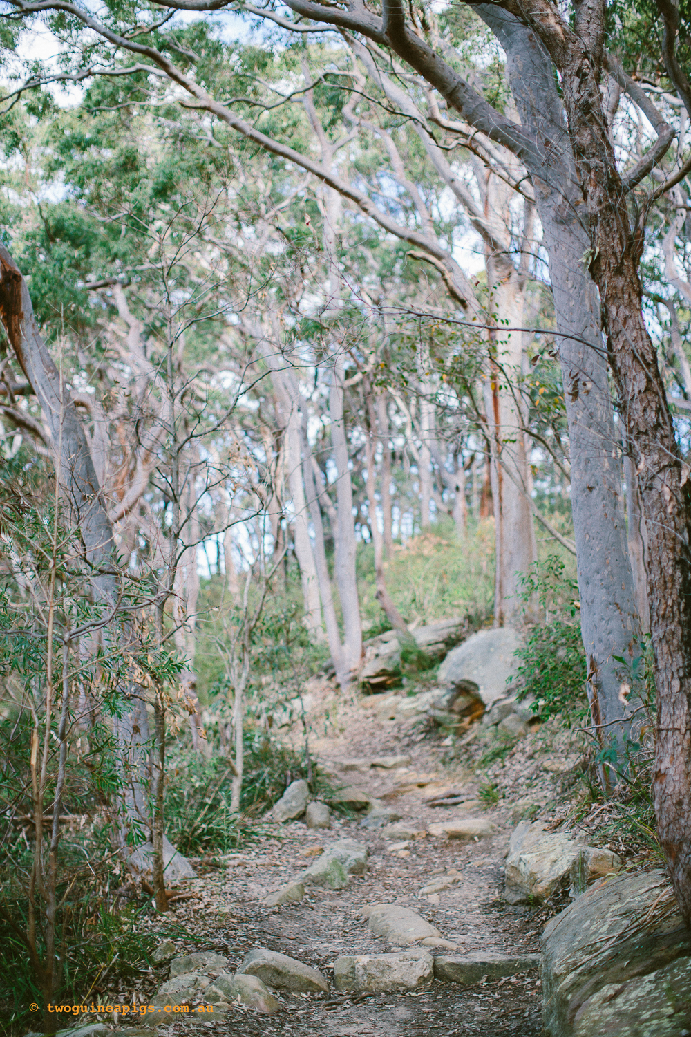 twoguineapigs_pet_photography_berry_island_reserve_wollstonecraft_location_scout_1500-17.jpg