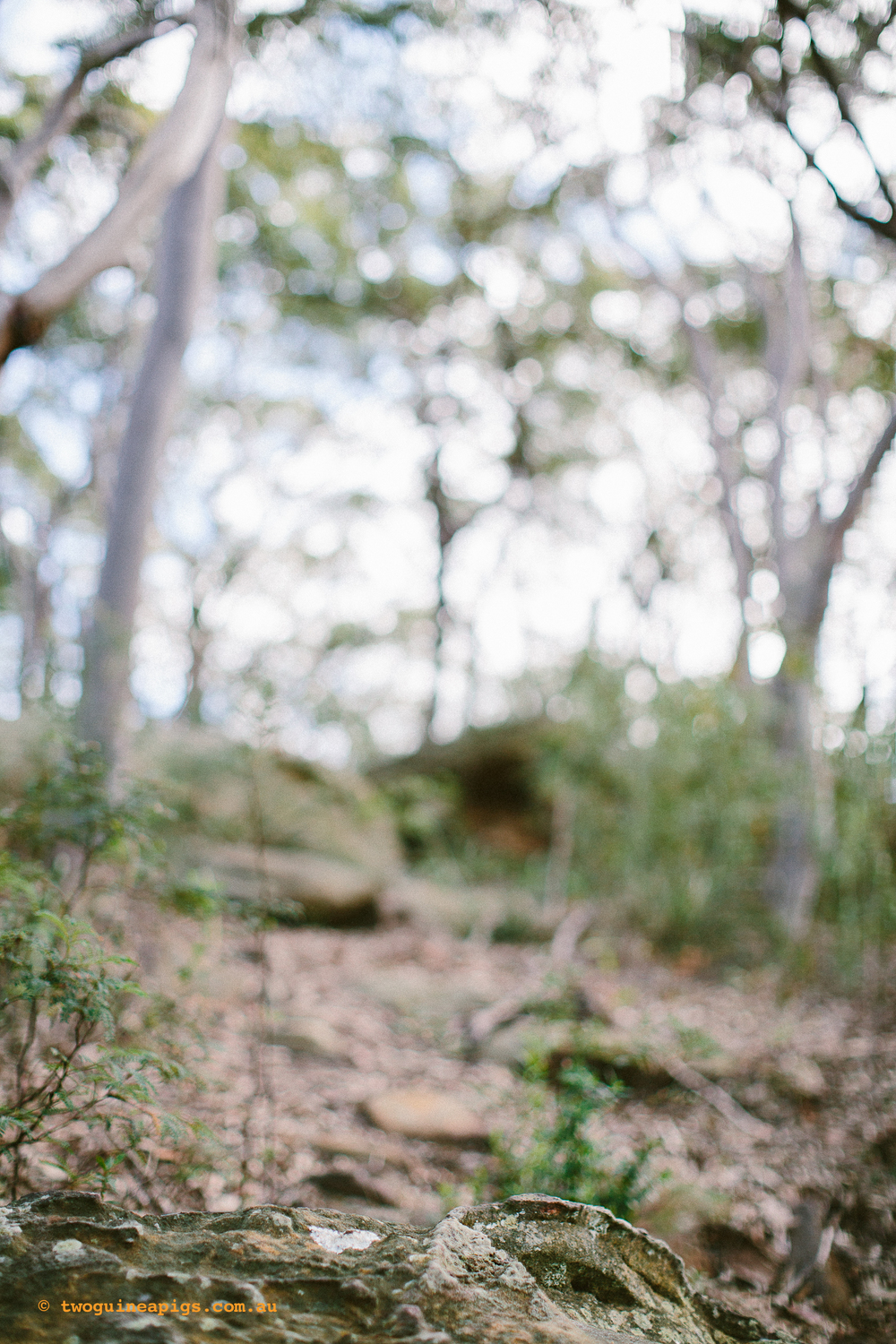twoguineapigs_pet_photography_berry_island_reserve_wollstonecraft_location_scout_1500-33.jpg