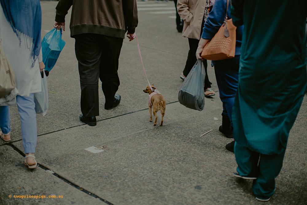 twoguineapigs_photography_haldon_street_festival_lakemba_2014_1500-44.jpg