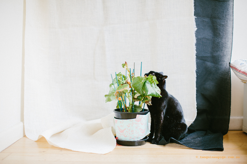 twoguineapigs_pet_photography_ruby_slipper_cat_floral_series_TEST_1500-23.jpg