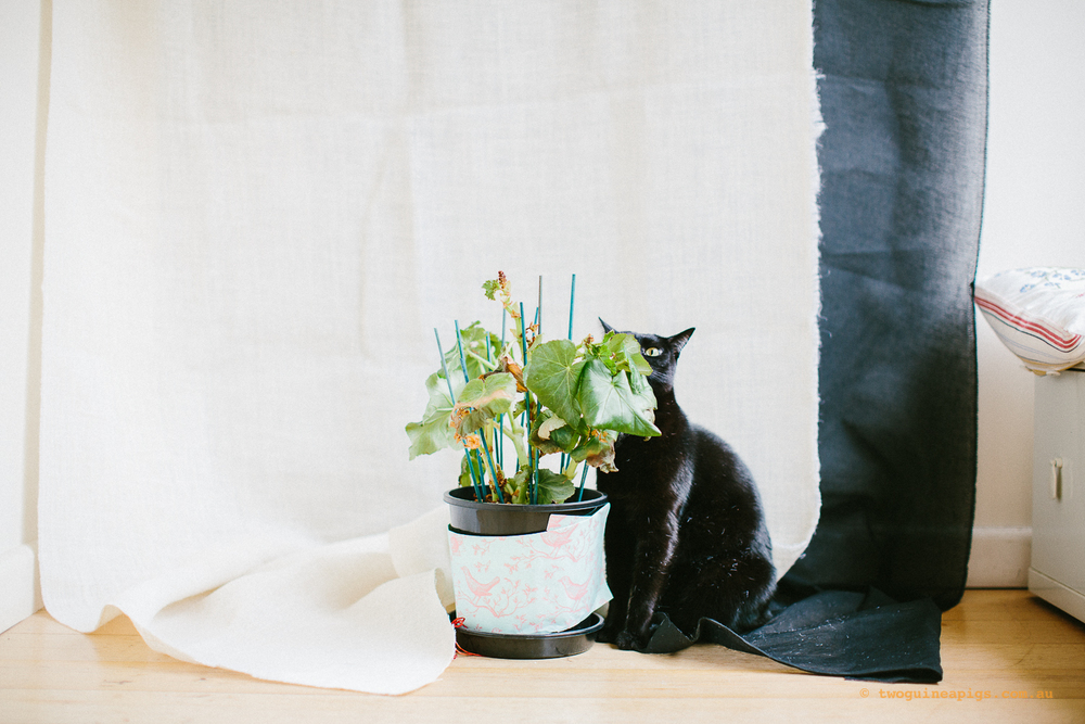 twoguineapigs_pet_photography_ruby_slipper_cat_floral_series_TEST_1500-25.jpg