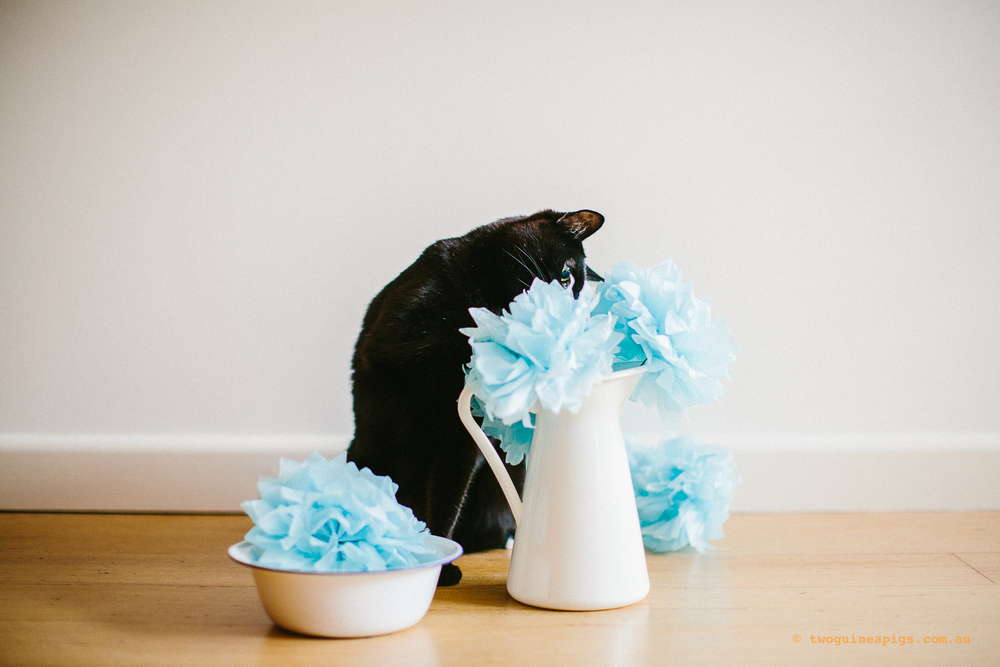 twoguineapigs_pet_photography_ruby_slipper_cat_floral_series_TEST_1500-36.jpg