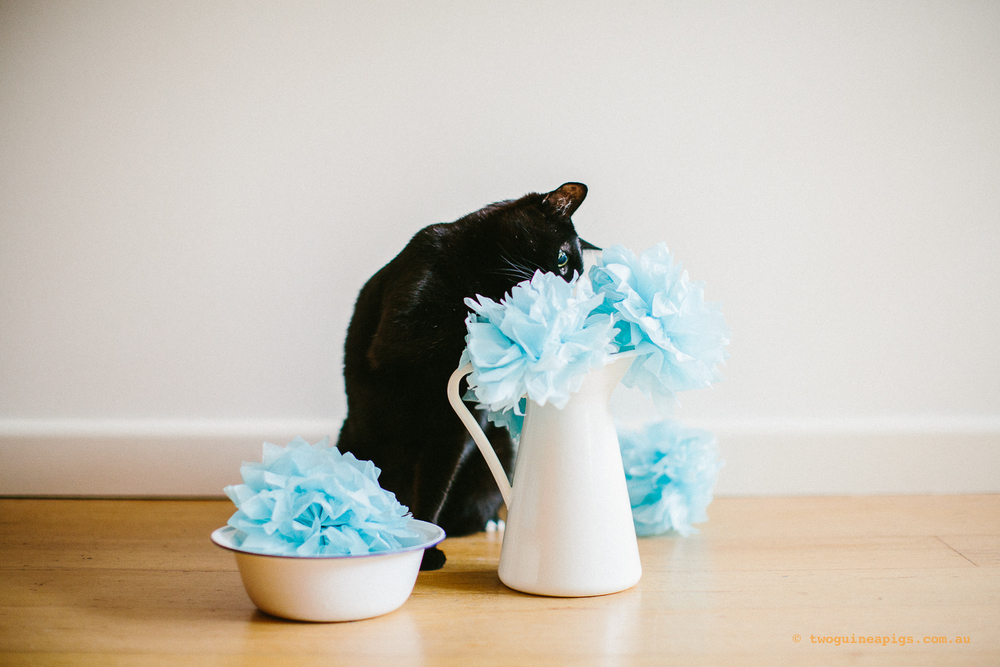 twoguineapigs_pet_photography_ruby_slipper_cat_floral_series_TEST_1500-37.jpg