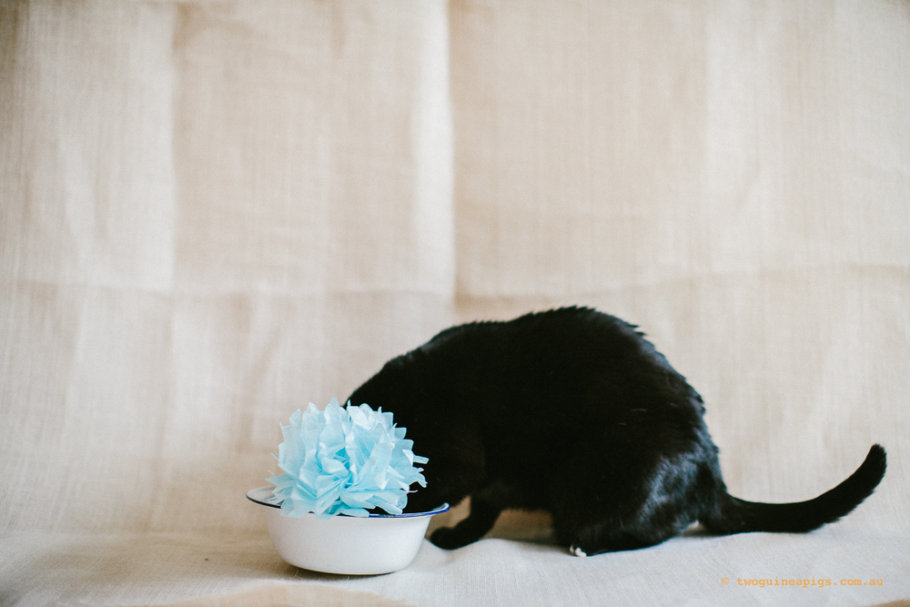 twoguineapigs_pet_photography_ruby_slipper_cat_floral_series_TEST_1500-39.jpg