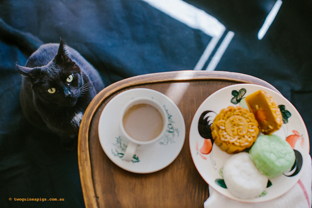 twoguineapigs_pet_photography_mooncake_festival_black_cats_1500-2.jpg